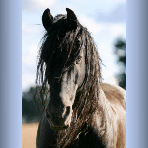 Hessel one of our horse riding lessons favorites